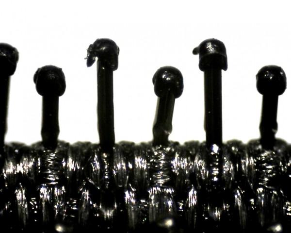 Pilzband